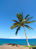 Palm tree near Kauna'oa Beach Stock Photos