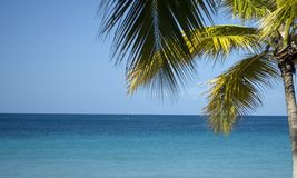 Palm Tree Near the Ocean. In St. Thomas,United States Virgin Islands Royalty Free Stock Photo