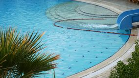 Palm tree near pool. Palm tree with green leaves near swimming pool stock footage