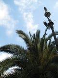 palm-tree-next-to-lamp-post Stock Photos