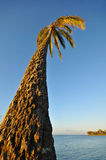 Palm tree next to the ocean into sky Royalty Free Stock Photography