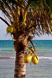 Palm Tree in Nice Light by Blue Sea Stock Photography