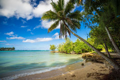 Palm tree in a nice quiet bay Stock Photos