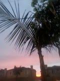 Palm tree. Nice skies! Palm trees  California Stock Photo