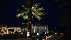 Palm tree in night illumination at the luxury hotel stock footage