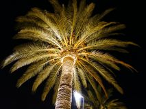 Palm tree at night lit by a spotlight from below stock image