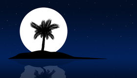 Palm tree at night in summer background Stock Image