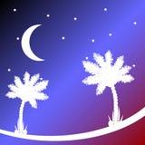 Palm tree at night. Stock Photography