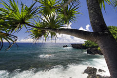 Palm tree on the northern coastline, on road to Hana, Maui, Hawaii Royalty Free Stock Images