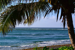 Palm tree on Oahu island beach Royalty Free Stock Photography