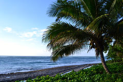 Palm Tree Oahu Island Beach Stock Photo
