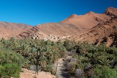 Palm tree oasis in Ait Mansour valley Stock Images