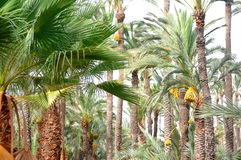 Palm tree oasis garden inside from marocco Stock Images