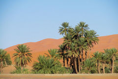 Palm tree oasis in sand desert royalty free stock photos