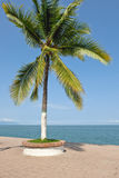 Palm tree by ocean Stock Photography