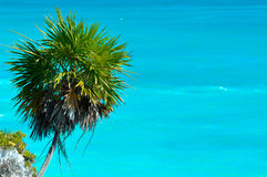 Palm Tree with Ocean. Palm Tree with Blue Ocean Background Stock Photos