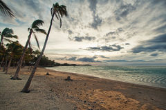 Palm tree and the ocean Royalty Free Stock Photos