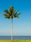 Palm tree by the ocean Stock Image