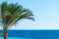Palm tree and ocean. Tropical palm tree and blue ocean Royalty Free Stock Photos