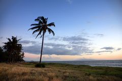 Palm tree at the ocean Royalty Free Stock Photos