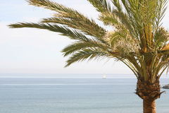 Palm tree and ocean Royalty Free Stock Images