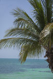 Palm Tree with Ocean Background. In Key West, Florida Royalty Free Stock Photos