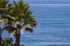 Palm tree ocean bakground Stock Photos