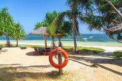 Palm tree on the ocean beach Stock Photo