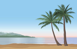 Palm tree on the ocean beach. Nature floral landscape Tropical b Royalty Free Stock Images