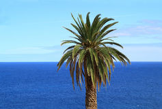 Palm tree and ocean Royalty Free Stock Image