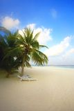 Palm tree on an ocean coast, Maldives Royalty Free Stock Photo