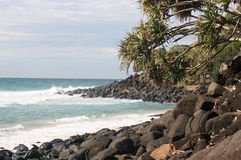 Palm Tree. By the Ocean Shore stock photos