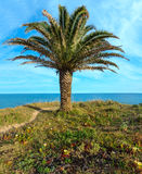 Palm tree on ocean shore. Royalty Free Stock Photo