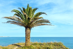 Palm tree on ocean shore. Stock Photography
