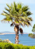 Palm tree on ocean shore. Royalty Free Stock Photography