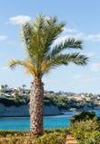 Palm tree on ocean shore. Royalty Free Stock Photos