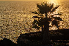 Palm tree on the ocean at sunset. And small walkway Stock Photos