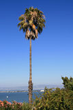 Palm tree with oceanview. Palm tree in San Francisco with ocean in the background Stock Images