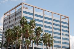 Palm Tree and Office Building Stock Photo