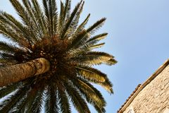 Palm tree and old stone house on sunny sky background royalty free stock photo
