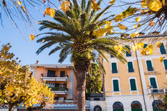 Palm tree on the old streets of Bellagio town. Como Lake, Italy royalty free stock photos