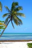 Palm Tree On Beach Royalty Free Stock Image