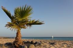 Palm Tree On The Beach Royalty Free Stock Photo
