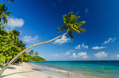 Palm Tree over Beach Stock Photo