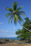Palm tree over the beach Royalty Free Stock Image