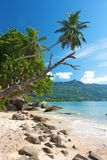 Palm tree over Beau Vallon. Old tree and palm reaching into the clear blue sky over a lonely beach and bay at Beau Vallon, Mahe, Seychelles Royalty Free Stock Image