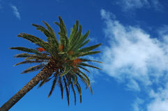 Palm Tree over Blue Sky Royalty Free Stock Photos