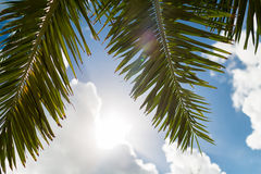 Palm tree over blue sky with white clouds Royalty Free Stock Photos