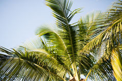 Palm tree over blue sky with white clouds Stock Photo