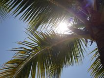 Palm tree over blue summer sky with sun Royalty Free Stock Photos